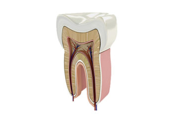 endodonzia-1